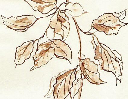 Le olteme foie – Le ultime foglie – poesia in dialetto bresciano con traduzione in italiano