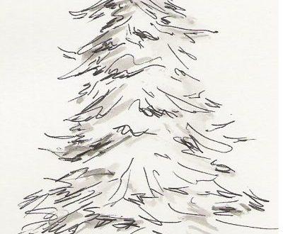 El pi – Il pino – poesia di Velise Bonfante in dialetto bresciano