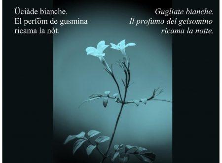 Haiku in dialetto bresciano