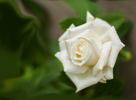 """Bisogna aver fede – Canzone dal musical """"Fiorì una rosa bianca"""" – la vita della beata Benedetta Bianchi Porro"""