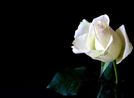 """Dio è il Dio della pace – Canzone dal Musical """"Fiorì una rosa bianca"""" – La vita della beata Benedetta Bianchi Porro"""