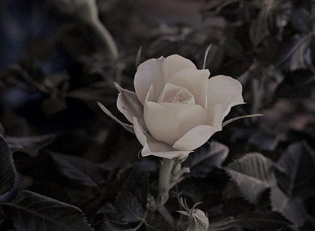 """Verso la pace verso la luce – Canzone dal musical """"Fiorì una rosa bianca"""" – la vita della beata Benedetta Bianchi Porro"""