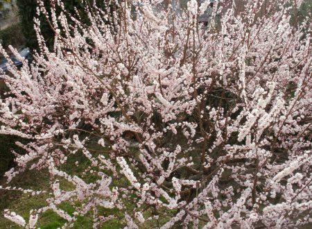 El vestare a primaera – L'armadio a primavera – di Velise Bonfante